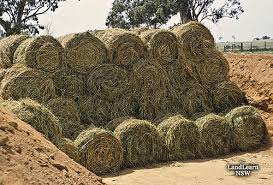 Midwest Radio - Minister to import Fodder as crisis intensifies