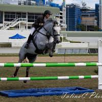 Knockmore showjumper in action in Copenhagen